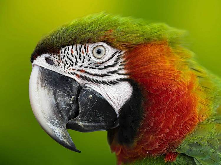 ptaki ciekawostki humor papugi