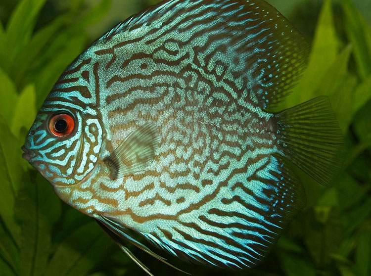ryby ciekawostki ryba humor